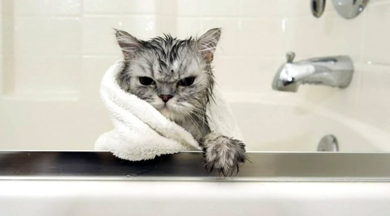 chat baignoire humour
