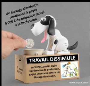 Tribunal correctionnel de Châteauroux – Le SNPCC gagne le procès contre un éleveur clandestin