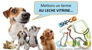 La vente de chiots et chatons en animalerie… – Interview du SNPCC pour le journal 20 Minutes