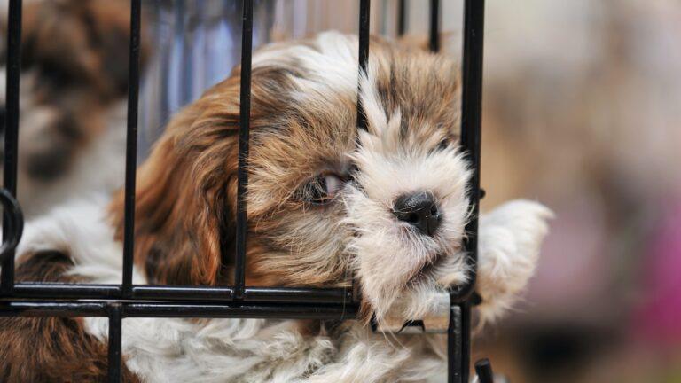 Fin des ventes de chiots et chatons dans les animaleries