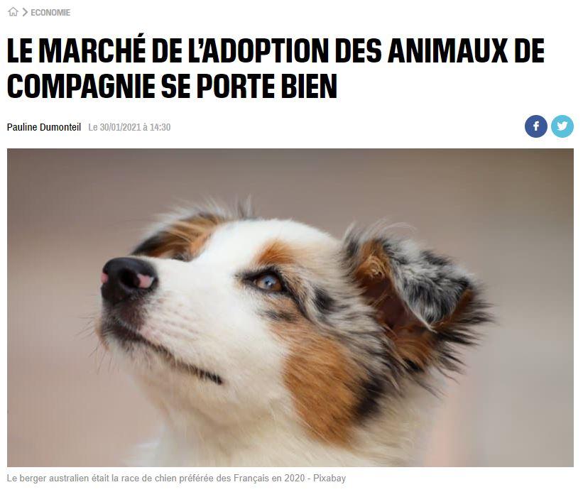 le marché des adoptions